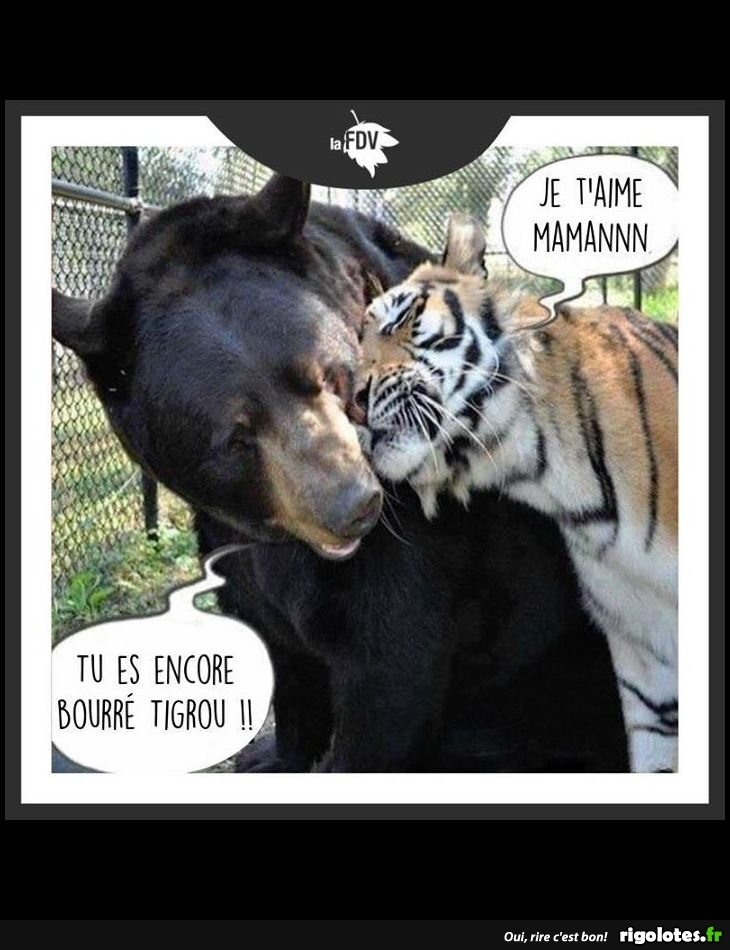 Animaux en Images  - Page 6 20180119