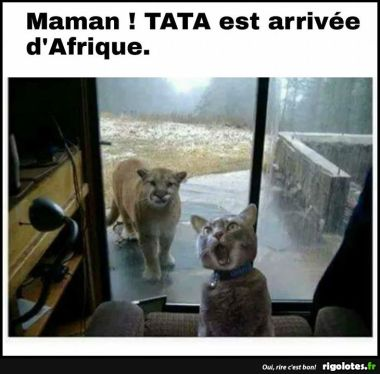 Animaux en Images  - Page 6 20180120