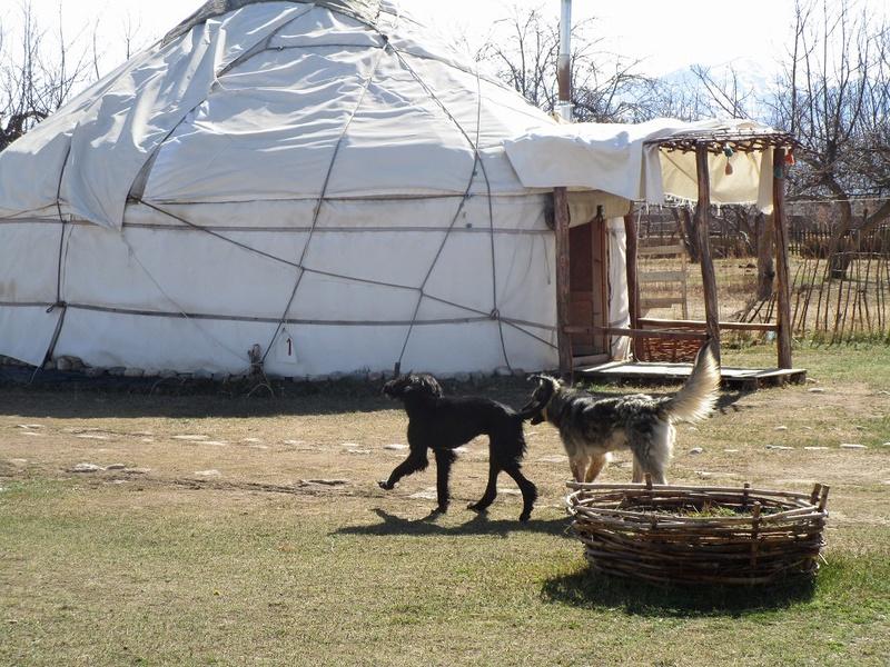 Kami, chien de randonnée - Page 21 19b1110