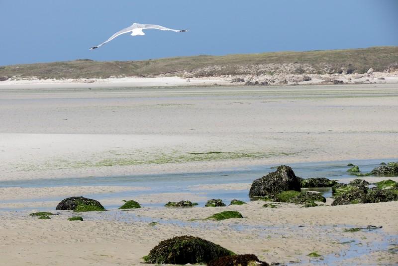 héron ,aigrettes et autres oiseaux ;  guisseny  ,étang prés de mer Img_9418