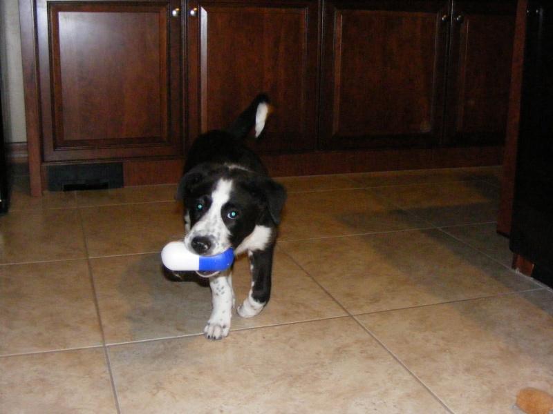 Levi (Dog) Dscf0013