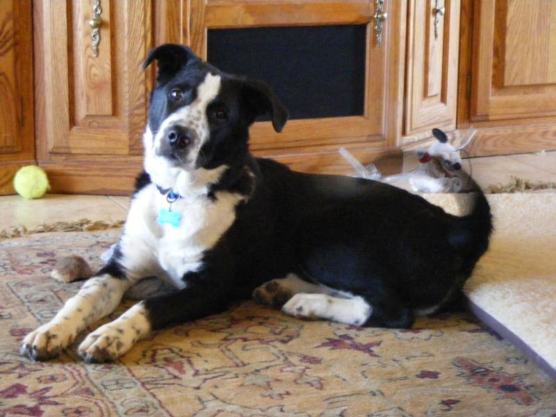 Levi (Dog) Dscf0110