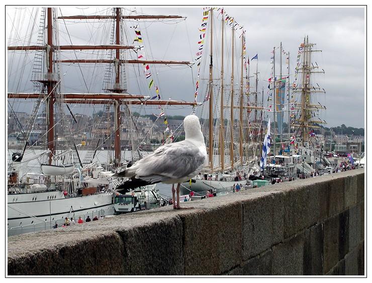 La Tall Ships Dscn5810