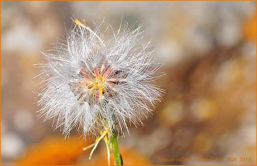 Al-Andalus (Andalousie - Algarve - Alentejo),  faune,  flore, paysages, maisons  et jardins fleuris - Page 18 14524510