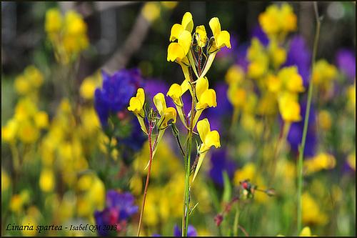 Al-Andalus (Andalousie - Algarve - Alentejo),  faune,  flore, paysages, maisons  et jardins fleuris - Page 18 14710410
