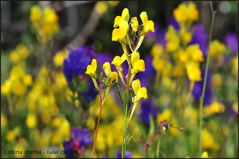 Al-Andalus (Andalousie - Algarve - Alentejo),  faune,  flore, paysages, maisons  et jardins fleuris - Page 18 14710411