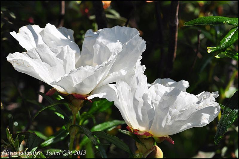Al-Andalus (Andalousie - Algarve - Alentejo),  faune,  flore, paysages, maisons  et jardins fleuris - Page 18 14792010