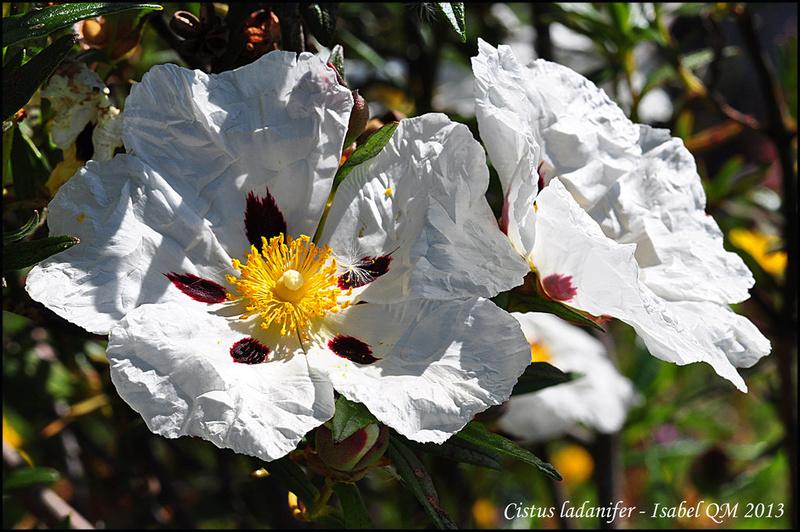 Al-Andalus (Andalousie - Algarve - Alentejo),  faune,  flore, paysages, maisons  et jardins fleuris - Page 18 14792011