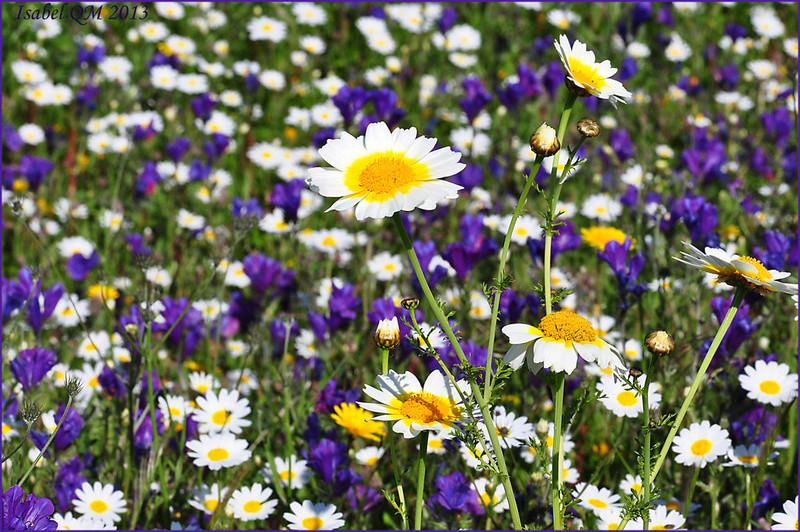 Al-Andalus (Andalousie - Algarve - Alentejo),  faune,  flore, paysages, maisons  et jardins fleuris - Page 18 14795613