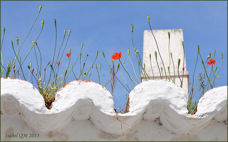 Al-Andalus (Andalousie - Algarve - Alentejo),  faune,  flore, paysages, maisons  et jardins fleuris - Page 18 14857210