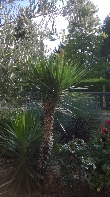 Jardin de Greg en Seine et marne 14961410