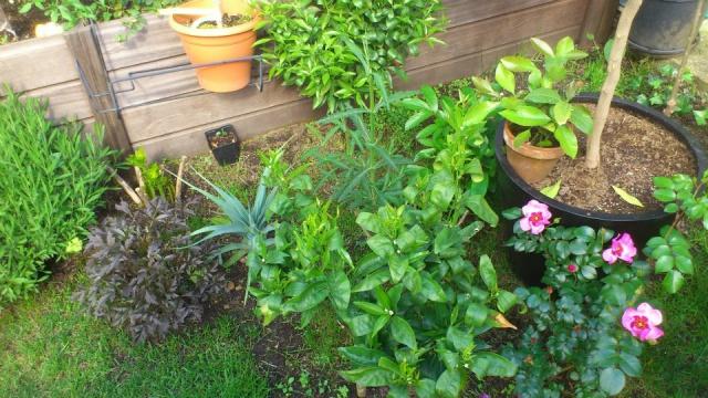 Mon petit jardin Bordelais - Page 2 19471810