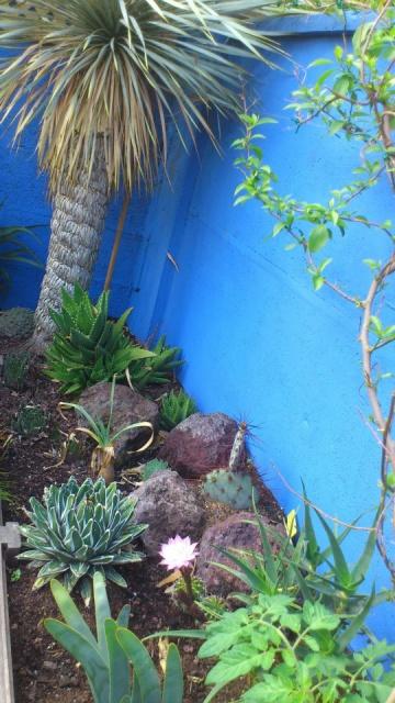 Mon petit jardin Bordelais - Page 2 21632610