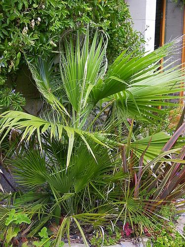 Mon jardin sur le littoral normand 27106310