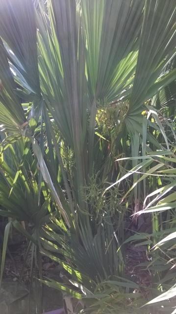 Jardin de Greg en Seine et marne 29807310