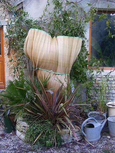 Mon jardin sur le littoral normand 31847710