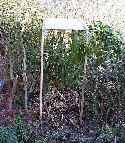 Mon jardin sur le littoral normand 31856310