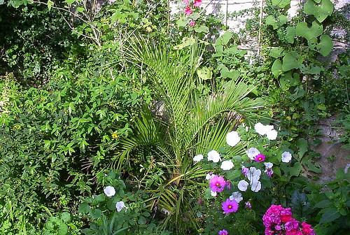 Mon jardin sur le littoral normand 31866410