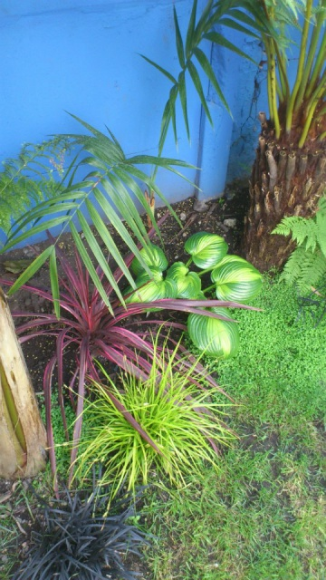 Mon petit jardin Bordelais - Page 2 34021710