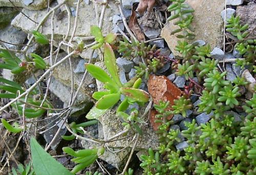 Mon jardin sur le littoral normand 34186410