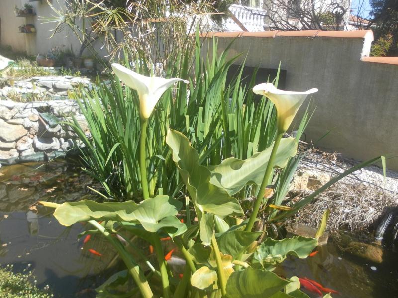 le jardin de syljou - Page 4 40543610