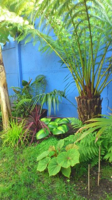 Mon petit jardin Bordelais - Page 2 59280610