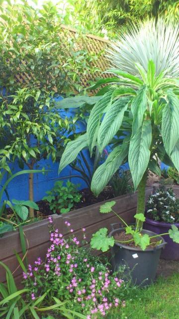 Mon petit jardin Bordelais - Page 2 66122110
