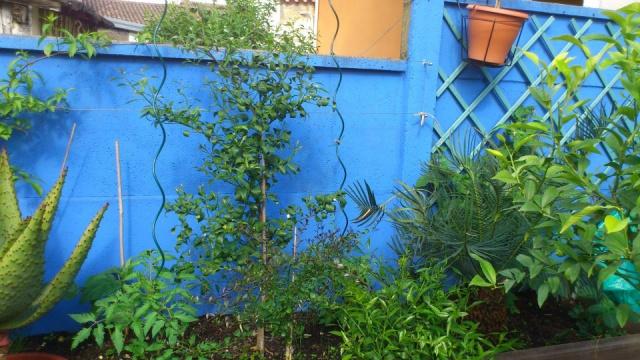 Mon petit jardin Bordelais - Page 2 74254810