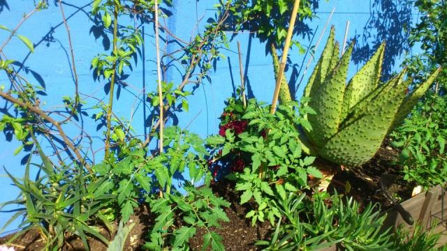 Mon petit jardin Bordelais - Page 2 93892310