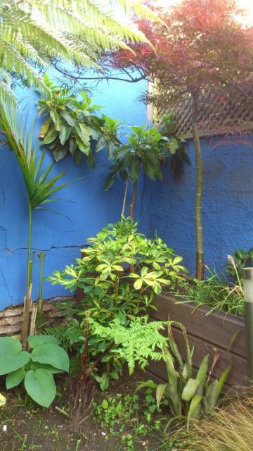 Mon petit jardin Bordelais - Page 2 94470610