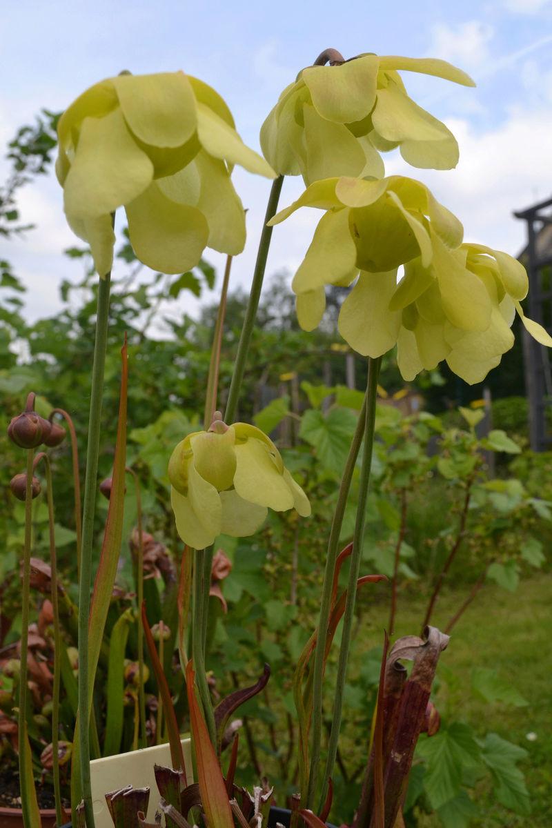 arios garden 2015 - Page 2 Sans_t50