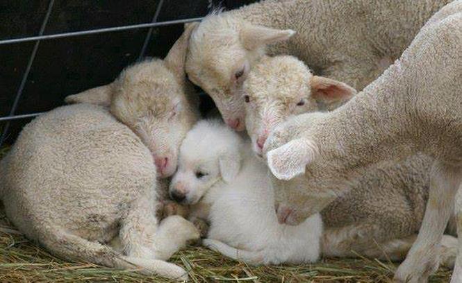 Les chèvres, Cachou, Crapouille, Mutine et les autres Byby_p10