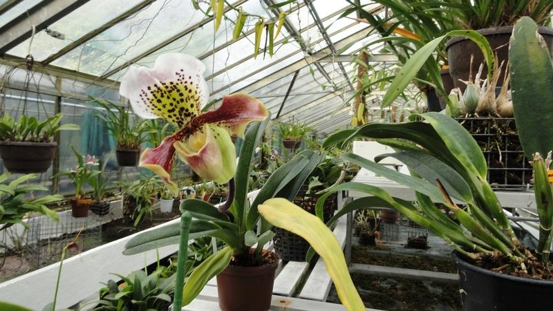 Ms Orchidées  Dsc05410