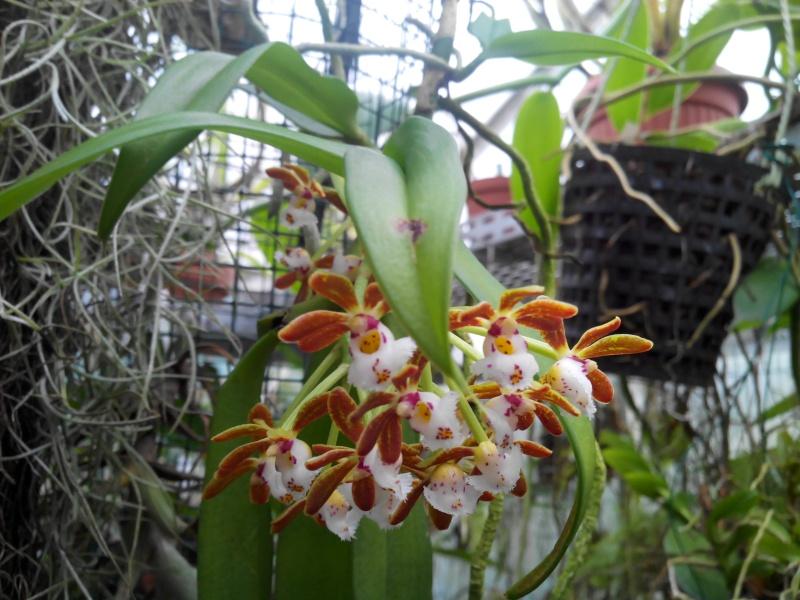 Ms Orchidées  Img_2011