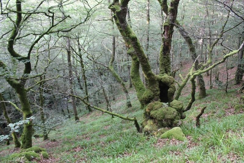 Vallée de la Petite Rhue - Marchastel  Img_8340