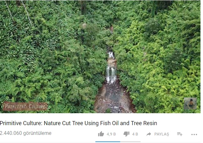 Doğada balık yağı ve ağaç reçinesi kullanarak ağaç kesme Adsz14