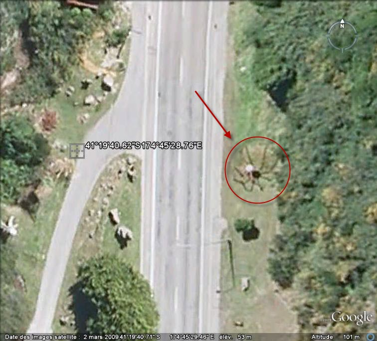 STREET VIEW : Araignée Happy valley NZ Araign10