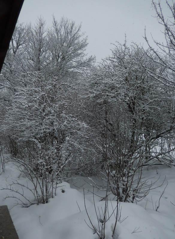 Encore de la neige ................... ? 2018-511
