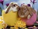 Joyeuses Pâques ! 28025910