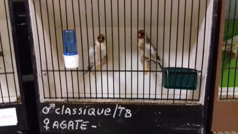 bourses d'oiseaux a flemalle - Page 3 20180154