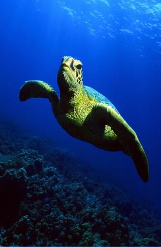 Diving Forum