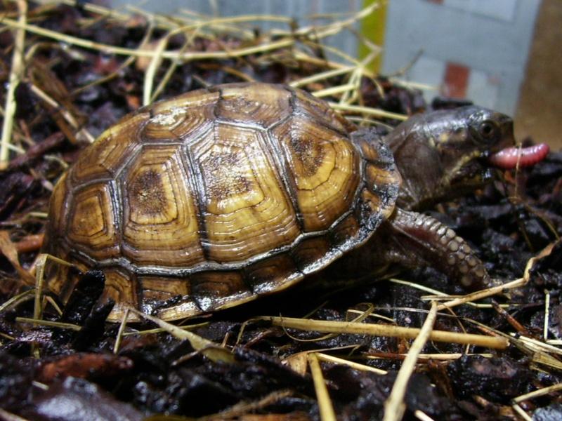 Quelque photos de tortues 100_0810