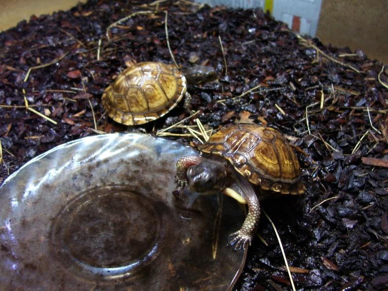 Quelque photos de tortues 100_0912
