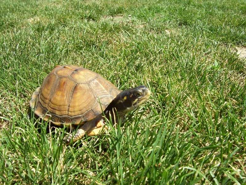 Quelque photos de tortues Terrap19