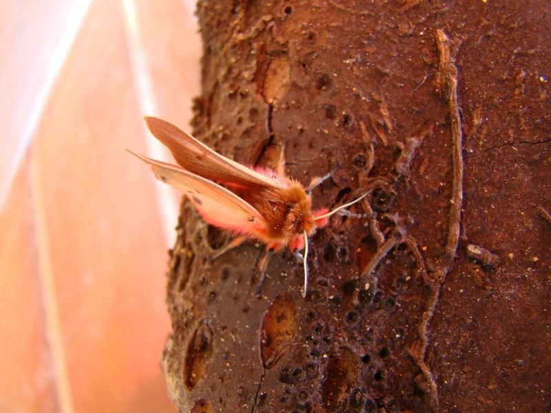 Petit papillon rouge... Dsc06210