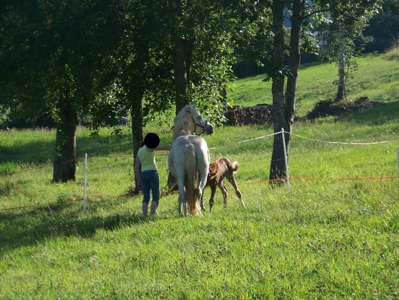 NINA - ONC selle typée Camargue née en 2002, et sa fille ALOE (2010) - adoptées en août 2010 par nine68 - Page 8 0161210