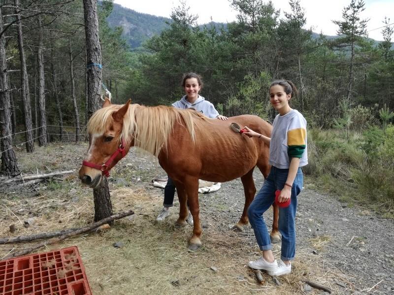 (04) CÂLINE - Poney née en 1990 - NON MONTABLE - A ADOPTER (126 € + don libre) Img_2035