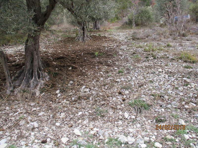 Les oliviers de Elie henry. Img_0822