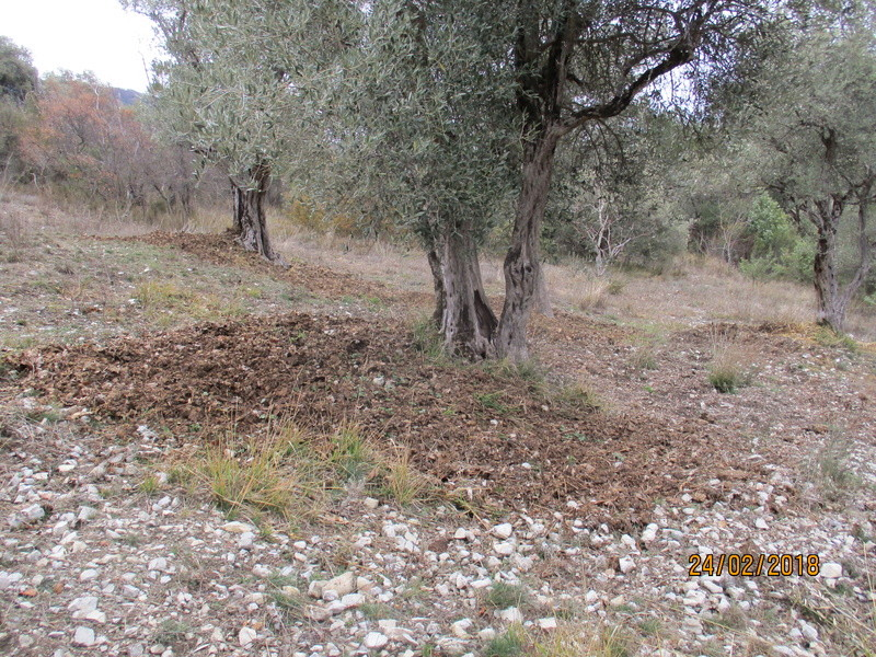 Les oliviers de Elie henry. Img_0823