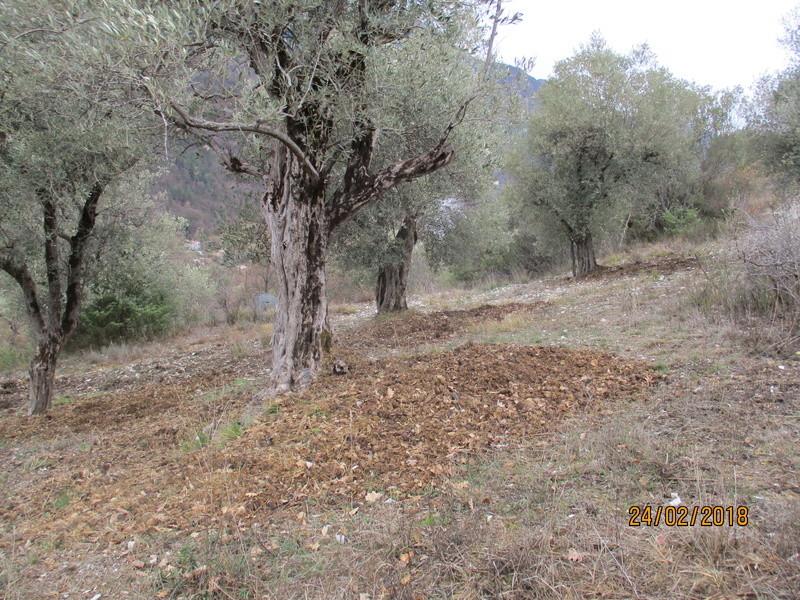 Les oliviers de Elie henry. Img_0824